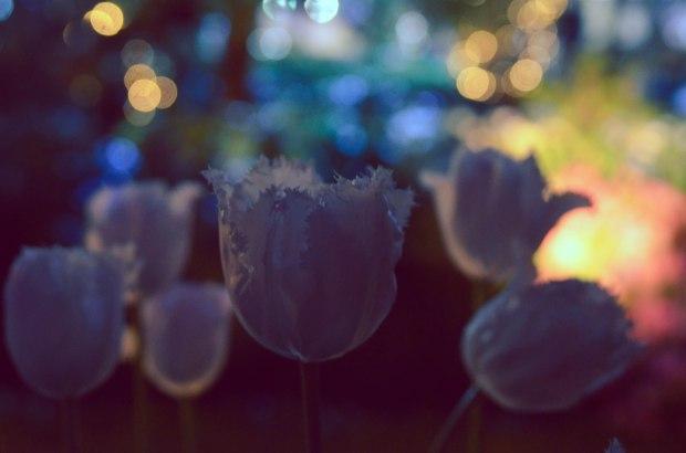 gardensbythebay-1182