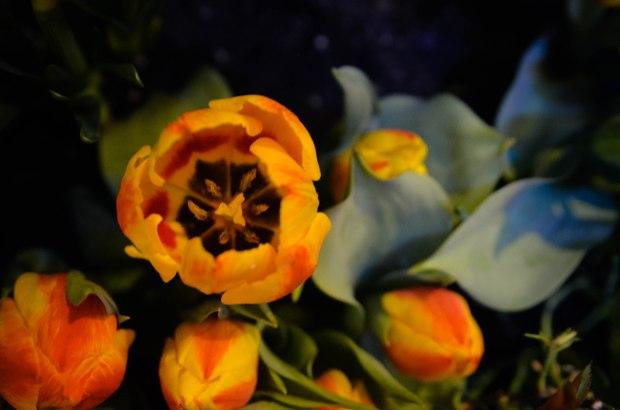 gardensbythebay-1238