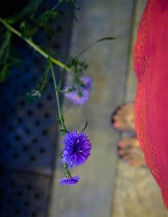 gardensbythebay-1240