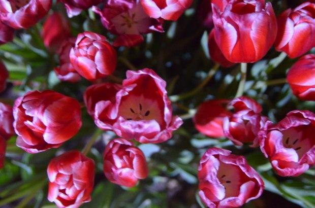 gardensbythebay-1256