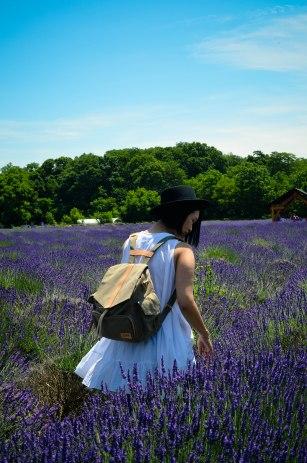 lavender-0134