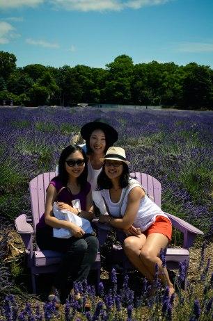 lavender-0140