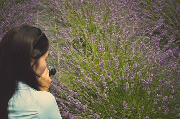 lavender-0190
