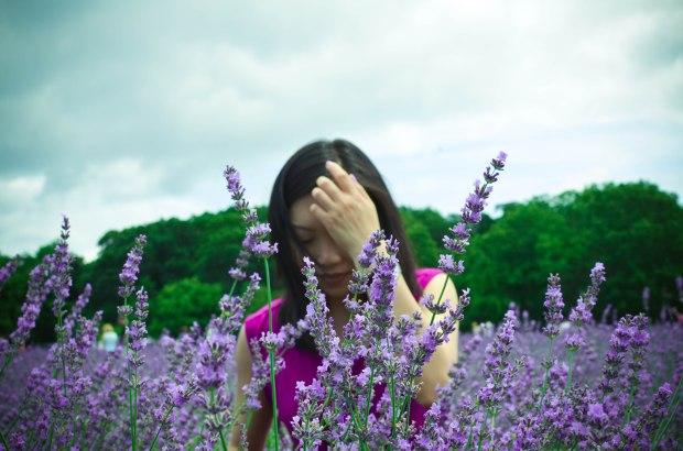 lavender-0244