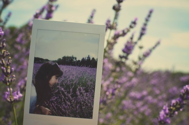 lavender-0293