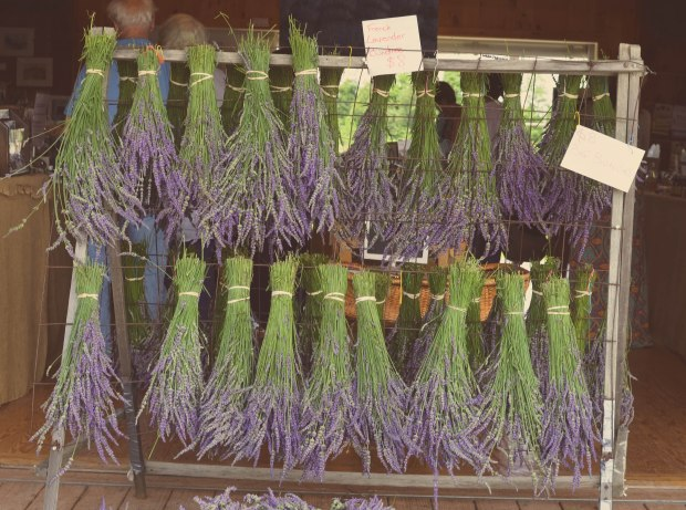 lavender-0304