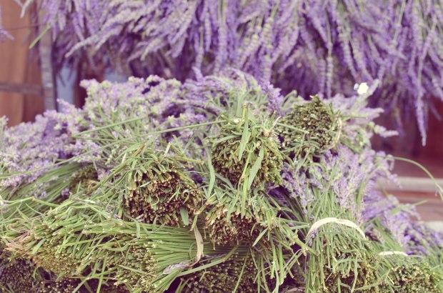lavender-0305